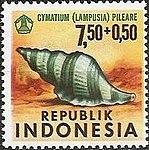 1969 Indonesia stamp Cymatium pileare.jpg