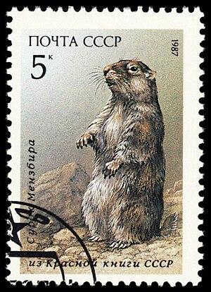 Menzbier's marmot - Image: 1987 CPA 5828