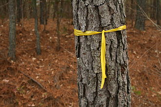 Awareness ribbon - Yellow ribbon marking a tree