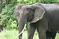 20090507-TZ-NGO Safari 343 (4678030488).jpg