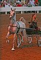 2009 Shelbyville Horse Show (3868246732).jpg