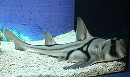 2009 shark in Shanghai.JPG