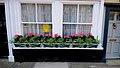 2009 windowboxes England 3630638228.jpg
