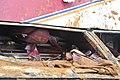 20100703중앙119구조단 인천대교 버스 추락사고 CJC3676.JPG