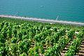 2012-08-12 10-40-33 Switzerland Canton de Vaud Chexbres.JPG