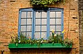 2012 windowbox London 7032687267.jpg