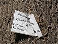 20130817Fraxinus excelsior Speyer4.jpg