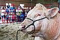 2014 Iowa State Fair (14693191268).jpg