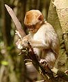 2016-04-21 13-53-14 montagne-des-singes.jpg