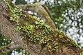 2016 Singapur, Ogrody botaniczne (037).jpg