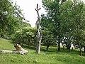 20180524255DR Maxen (Müglitztal) Baum am Stauteich der Winterleite.jpg