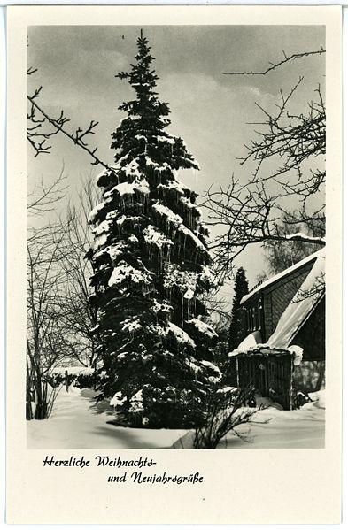 file 29145 sohland 1956 tanne im winter weihnachtsgr e br ck sohn