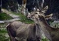 2 deers.jpg