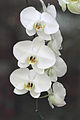 30 days - orchid - from flickr.jpg