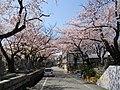 3 Chome Nakasakurazuka, Toyonaka-shi, Ōsaka-fu 561-0881, Japan - panoramio - yokoyokoi (3).jpg