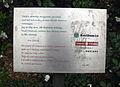 55 Placa del pi de l'Escola Massana.jpg