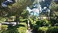 83230 Bormes-les-Mimosas, France - panoramio - 4net (1).jpg