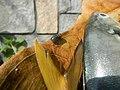 9018Fish shellfish of the Philippines 23.jpg