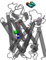 File:A-Steered-Molecular-Dynamics-Study-of-Binding-and-Translocation-Processes-in-the-GABA-Transporter-pone.0039360.s013.ogv