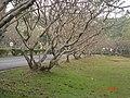 AIT - panoramio - Seksan Phonsuwan (121).jpg