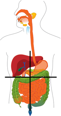 Abdominal Pain Upper Right Quadrant http://en.wikipedia.org/wiki/Left_upper_quadrant