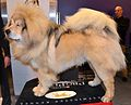 A Tibetan Mastiff.jpg
