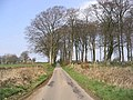 A country road at Carruchan - geograph.org.uk - 383453.jpg