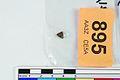 A fragment of silver pressblech foil from a helmet (FindID 555884).jpg