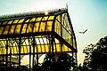 A piece of Glasshouse.jpg