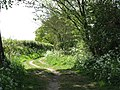 A shaded path - geograph.org.uk - 1293732.jpg