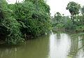 A small canal near Sanghivalasa.JPG