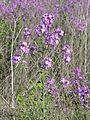 Ab plant 1839.jpg