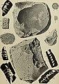 Abhandlungen der Königlich Bayerischen Akademie der Wissenschaften (16143337274).jpg