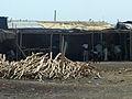 Afdera-Maisons en tôle et bois (1).jpg