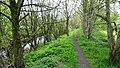 Afton Water path, New Cumnock, South Ayrshire, Scotland.jpg