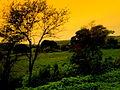Agriculture in Pratapgarh, Rajasthan.jpg