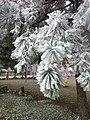 Ahlatlıbel, 06805 Çankaya-Ankara, Turkey - panoramio (9).jpg