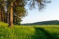 Aleksin-bor road.jpg