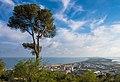Aleppo Pine and the sandspit, Sète.jpg