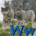 Alfabet zwierząt - literka W.png