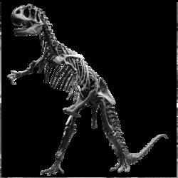 Un dinosaure du Jurassique: l'allosaure.