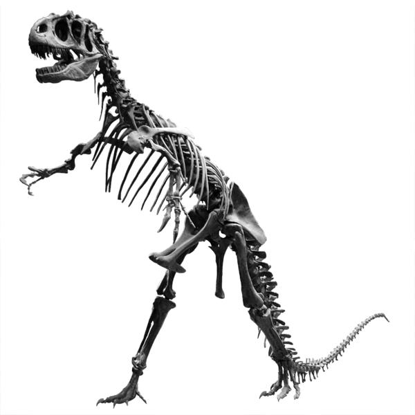 File Allosaurus Jardin Des Plantes Png Wikimedia Commons