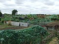 Allotments - geograph.org.uk - 1465310.jpg