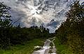 Amager Fælled path.jpg