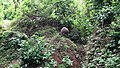 Anamalai Tiger Reserve, Pollachi - panoramio (4).jpg