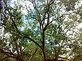 Ananda Bodhi Viharaya - panoramio (6).jpg