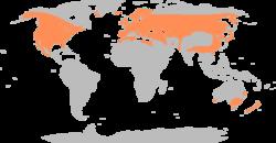 البط البري Anas platyrhynchos 250px-Anas_platyrhyn