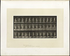 Animal locomotion. Plate 174 (Boston Public Library).jpg