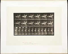 Animal locomotion. Plate 623 (Boston Public Library).jpg