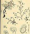 Annals of the South African Museum - Annale van die Suid-Afrikaanse Museum (1955) (18421131155).jpg